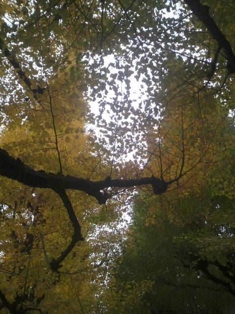 No.80 PRIME 「秋の恵み」