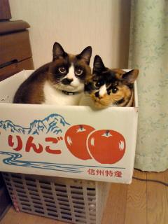 PRIME No.283「にゃんこ!!<br />  &プチネイル」